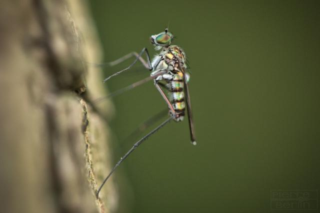 Insekten-Makro