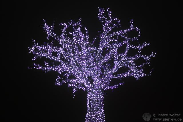 Baum am Potsdamer Platz