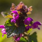 Makro irgendeiner Pflanze