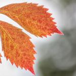 Blätter-Makro