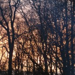 Sunset behind the woods