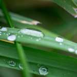 Regentropfen - Makro -  Blätter
