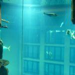 Sea Life/Aqua Dom
