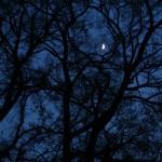 Mond hinterm Baum