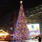 Weihnachtsbaum auf dem Marlene Dietrich-Platz