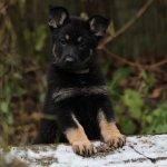 Hund: Hundebaby