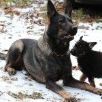 Hunde: Mutter und Kind im Schnee