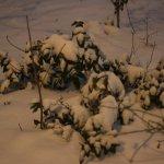 Schneebedeckte Flora