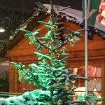 Grün angestrahlter schneetragender Weihnachtsbaum