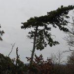 Interessanter Baum.
