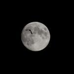 Mond, Vögel
