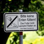 Bitte keine Enten füttern!