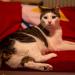 Katze ganz königlich