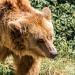 Bären Maxi und Schnute im Köllnischen Park
