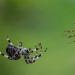 Begegnung am Spinnennetz