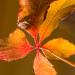 Laub in Herbst-Sonne