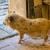 Waldzoo Gera / Schwein