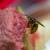 Wespe schneidet Fleisch ab
