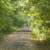 Weg im Anton-Saefkow-Park