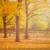 Herbst im Friedrichshain
