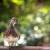 Ente vom Schlosspark Charlottenburg