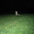 Fuchs im Viktoriapark