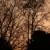 Sonnenuntergan hinter Bäumen