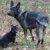 Hunde: Mutter mit Kind