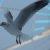 Fliegende Möwe vor Riesenrad
