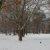 Schnee in Berlin-Mitte