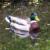 Ente mit Spiegelung