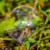 Seifenblase auf Grashalmen
