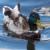 Ente auf der Spree