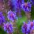 Blumen / Blüten