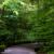 Pfad durchs Grün steil nach unten