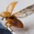 Fluchtversuch eines Marienkäfers