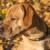 Hund / Goldener Oktober