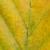 Herbst / Gelb-grünes Blatt